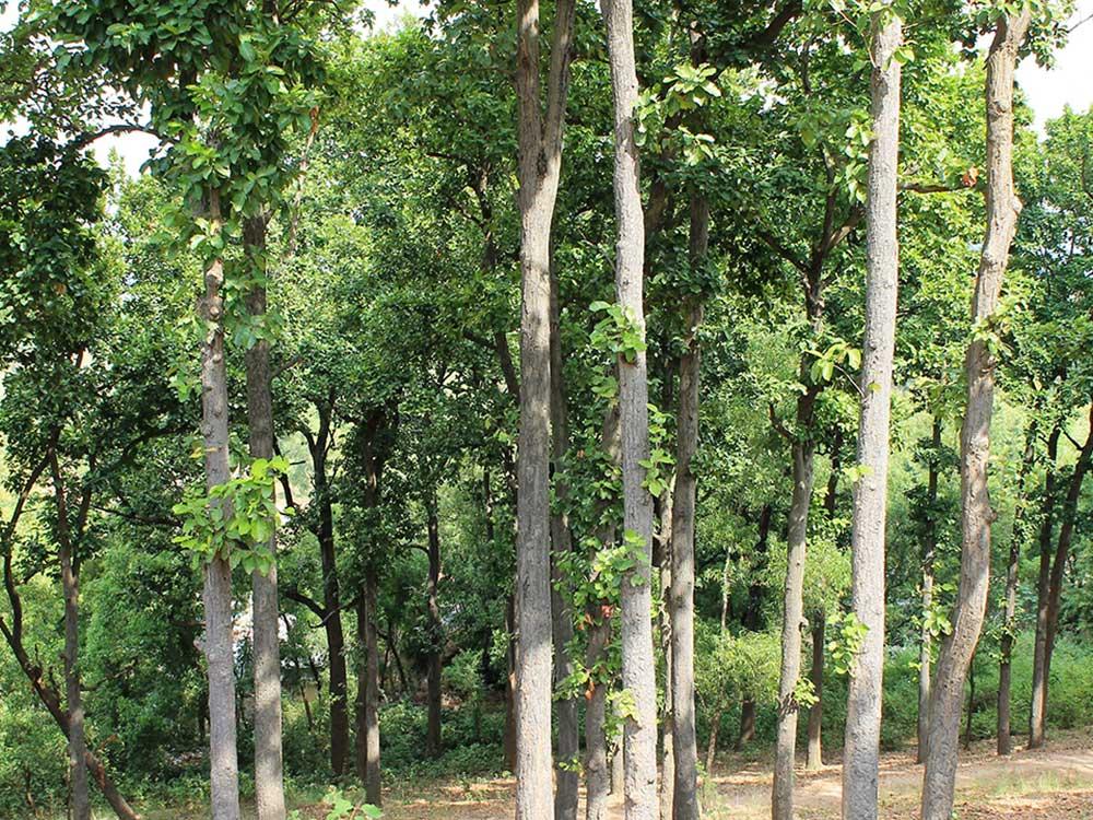 Banabithi